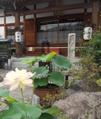 giant lotus